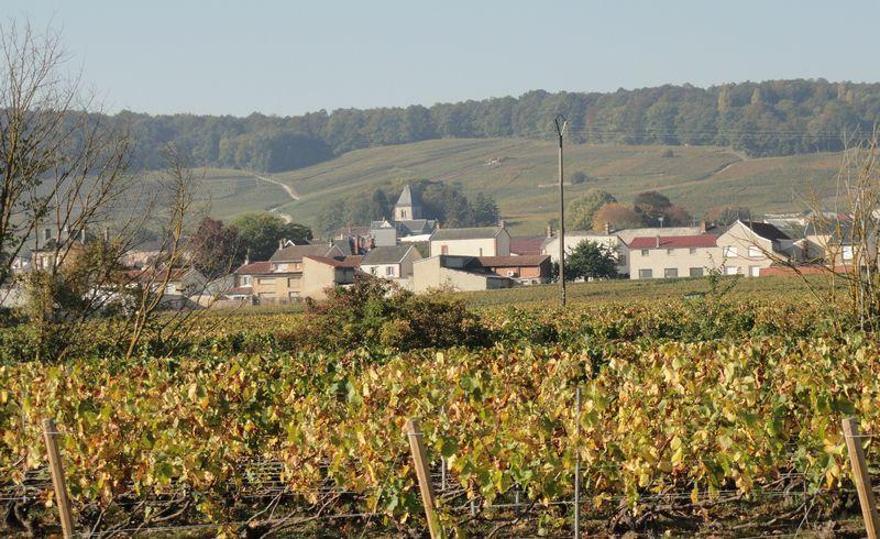champagne Salon à Mesnil sur Oger